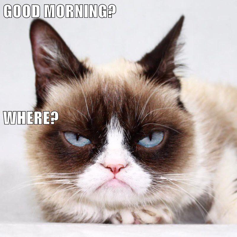 Grumpy Cat Good Morning Where